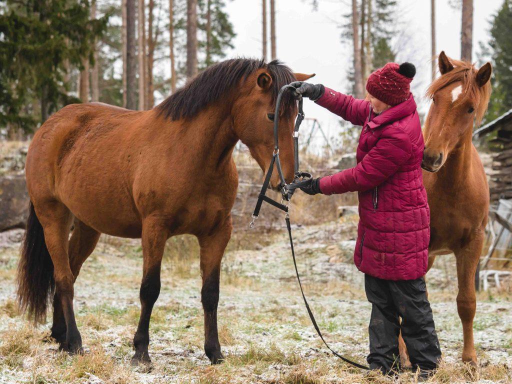 Kivikkolan tila, Virva ja hevonen