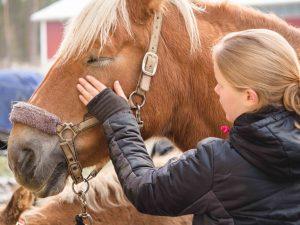 Hevonen silityksessä, Kivikkolan tila