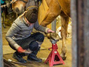 Virva ja hevosen kengitys, Kivikkolan tila