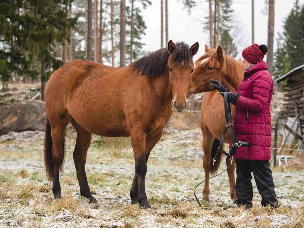 Kivikkolan tilan hevosia ja Virva