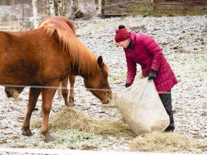 Heinää hevosille, Kivikkolan tila